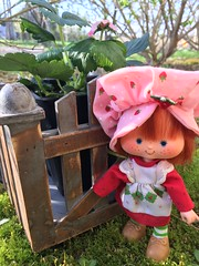 Growing strawberries (Foxy Belle) Tags: doll spring strawberry blossom plant flowers moss shortcake pink hat dress