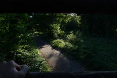 Abends im Wald   evening in the woods (rainbowcave) Tags: beautiful light sun sunny beams forest woods wald abendsonne natur stimmung path weg trees bäume