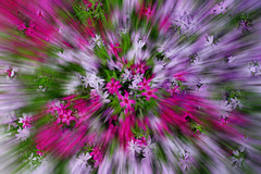 burst of  colors (mariola aga) Tags: spring flowers art mothersday coth alittlebeauty thegalaxy coth5 fantasticnature