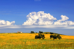 Campo andaluz - Andalusian countryside  # 03 (ricardocarmonafdez) Tags: andalucía sevilla campo countryside field color blue yellow spring cielo sky nubes clouds sunlight arboles trees 60d 1785isusm canon naturaleza nature