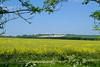 Wilton Windmill (christina.marsh25) Tags: wiltonwindmill greatbedwyn wiltshire countryside farming fields rapeseed