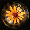 Vase of Flowers (Laura Drury) Tags: vase flowers rudbeckia glass stilllife colour yellow orange petals circle