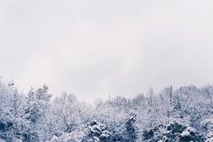 after the snowy night 2 (qw0aszx) Tags: 35mm film china hangzhou canonae1 fujic200 snow westlake