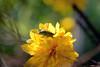 DSC_3974 (Oleg1961) Tags: tokina atx pro 100mm f28 d macro autumn flowers insects dew grass
