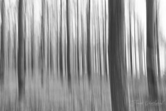 forest BW (Jaco Verheul) Tags: d7100 jaco nikon verheul forest wood woodland monochrome zwartwit blacknwhite black blanc grey schwarz weiss lines trees tree movement landscape noir gris white blur stripes