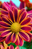 Mother day in Mexico (ingcuevas) Tags: flower flor beautiful hermosa pretty bonita love amor colores colours colorful naturaleza natural natura amarillo rosa life vida close up acercamiento