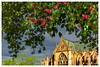 Cathédrale de Metz (Pascale_seg) Tags: moselle lorraine grandest france metz cathédrale église ville printemps spring arbre tree flower fleurs rouge red sky ciel town nikon sundown sun feuilles leaves cathedral light framed frame floral fleuri