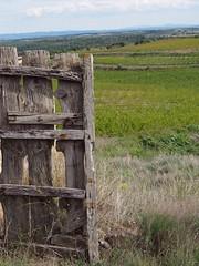 Old door (pepa_carbassa) Tags: door puerta porte porta lanscape payssage paisaje paisatge green verde vert verd spring printemps primavera
