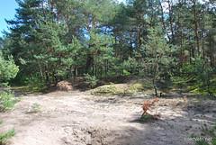 Волинський ліс InterNetri Ukraine 2045560670