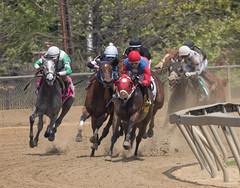 2018 Pimlico Race track (2) (maskirovka77) Tags: pimlico dirt mare race racehorse threeyearold turf yearling