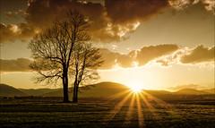tree (witoldp) Tags: beskid beskidy tree sunset poland landscape field sun chapel