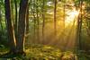 Lights of the Spring (Hector Prada) Tags: forest spring light sun sunlight sunrise sunny tree backlight magic ephemeral spiritual bosque primavera luz sol amanecer árbol contraluz momento mágico efímero naturaleza nature paísvasco basquecountry