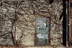 love yourself (.grux.) Tags: asahipentaxsv supermulticoated takumar35mmf35 film svemacolor125 expiredfilm sunnyf16 backlane walkabout vines graffiti loveyourself wall door m42 toronto