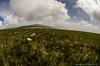Paradis de l'anémone (Manonlemagnion) Tags: paysage nature montagne fleur anémonne alpine blanche hohneck vosges nikond7000 105mm