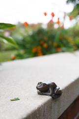 127/365 little frog