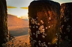 Buhnen in Glowe (drummerwinger) Tags: rot buhnen glowe rügen strand beach himmel canon80d tokina ostsee clouds urlaub sun sonne muscheln