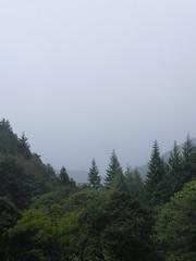 DSCN0108 (Gianluigi Roda / Photographer) Tags: forestecasentinesi toscana appennino latesummer september 2012