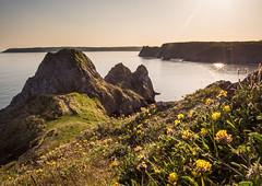 "Three Cliffs Yellow Flowers (Chris ""Donny"" Donohoe) Tags: cliffs coast threecliffsbay three bay flowers sea landscape sunset"