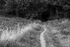 Into the Woods (bkjones857) Tags: trail hiking woods nature path monochrome blackandwhite