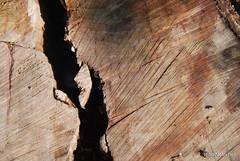 Зріз дерева InterNetri 3