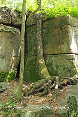 Worlds End SP (47) (Framemaker 2014) Tags: worlds end state park sullivan county forksville pennsylvania endless mountains united states america