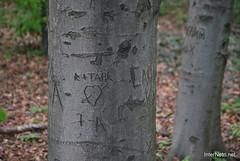 Ботанічний сад імені Гришка Буковий гай InterNetri  Ukraine 112