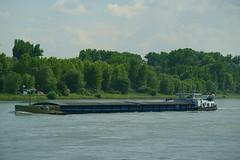 MS SAEFTINGE (Lutz Blohm) Tags: mssaeftinge speyer rhein rheinschifffahrt binnenschifffahrt binnenschiffe gütermotorschiff fe70300goss sonyalpha7aiii fluskilometer402