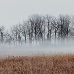 Trees And Reeds In The Fog 04 thumbnail