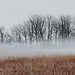 Trees And Reeds In The Fog 04