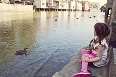 L'admiration (catoche1988) Tags: enfant children oiseau canard bird water eau
