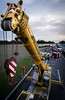 Truck accident clean-up (Erik Tjernlund) Tags: accident crane dramatic fuji fujifilm gland highway lacôte truck xpro2 xf16 xf16mm xf16mmf14 switzerland vaud rolle caraccident a1 lausanne geneva routedegilly e25 e62 routedeletraz lerosey