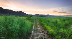 Hidden Railway (vincent.lecolley) Tags: field sunset landscape cane sugarcane rail railway hidden asia philippines negrosoriental bais nikon d3300