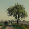 In the Spring Fields (Netsrak) Tags: baum weg frühling eifel zaun plantage gras löwenzahn blüten
