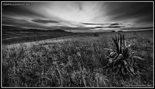 Vast Land (Black and White Sunset Sonoita AZ)