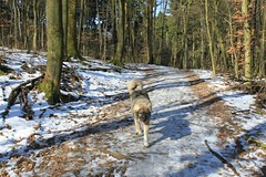 """Tierpark Bielefeld • <a style=""""font-size:0.8em;"""" href=""""http://www.flickr.com/photos/82496916@N07/41776959262/"""" target=""""_blank"""">View on Flickr</a>"""