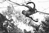 Spider Monkey (Jacqueline Sinclair) Tags: mexico monkey spider grain animal portrait action swing swinging nature canopy jungle