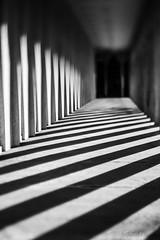 Zebra shadows (Scott Shields Photo) Tags: wayne state university education building detroit shadows lensbaby edge50 2018