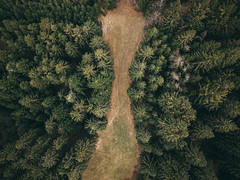 Structures (desomnis) Tags: drone dronephotography forest woods woodland trees treeline forestglade forestgreen nature naturephotography natur desomnis mavic djimavicpro fromabove