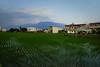 rizière, maisons, montagne au loin (8pl) Tags: maisons rizière eau village lignes taïwan campagne matin paysage cultures agriculture champ champderiz riz