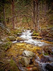 Río Navacerrada | Parque Natural La Barranca | Navacerrada | Madrid (alrojo09) Tags: arojo09 ríonavacerrada parquenaturallabarranca sierra guadarrama navacerrada madrid spain