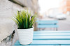 _MG_8559 (Jagot) Tags: canonef28mmf18usm canoneos6d europe poland krakow plant table cafe green blue street kraków małopolskie pl