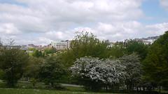 Espino albar (Jusotil_1943) Tags: 040518 espino albar arboles trees paisaje urbano entrearboles oviedo