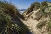 Sur la dune de Pirou - Cotentin (Cri.84) Tags: dune sable plage cotentin normandie pirou mer