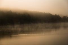 Somormujos (Roberto_48) Tags: somormujos niebla embalse cuerda pozo vinuesa soria