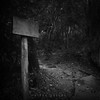 a sign to nowhere.. (Elton Pelser) Tags: lowkey dark shadows bw blackandwhite monochrome creepy square 11 forest noir woods trees darktable mysterious tree wood sign post pathway
