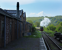 Approaching Whitecroft. (ralph.ward15) Tags: deanforest whiitecroft steam industrial sheep train 5541
