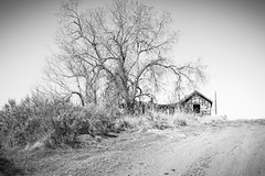 Warm Springs Valley, Modoc County, California (paccode) Tags: solemn d850 landscape desert bushes brush serious quiet california abandoned monochrome urban house dirtroad tree creepy forgotten scary farm blackwhite canby unitedstates us