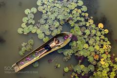 Kampot's Lilies Pond (vinayakjnavalur1) Tags: ifttt 500px travel kampot lily flower pond cambodia boat boy dji mavicpro sky water above leaf leaves kid child relax sleep sleeping harvest