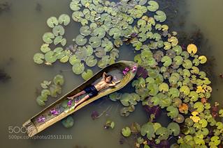 Kampot's Lilies Pond