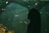 (Lucas/mmetry) Tags: wrocław zoo oceanarium girl girlfriend wife model mirrorlesscamera mirrorless hexanon40mm hexanon40mm18 devilisinthedetails intheshadows deepwater water aqua aquarium greenisbeautifull green fauxvintage indoor artistsonflickr photooftheday photographersonflickr digitalphotography photographers